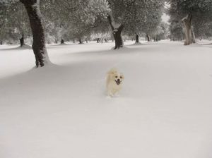 Little white dog in the snow