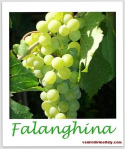 Falanghina Grapes