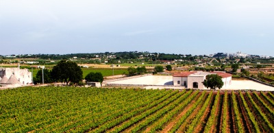 Rows of vines at I Pastini Vineyard