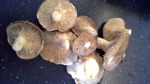 Cardoncelli mushrooms