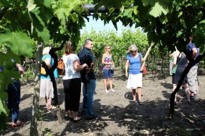 Tour of the Vineyard