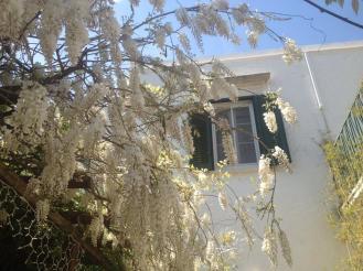 Il Frantoio Bloom