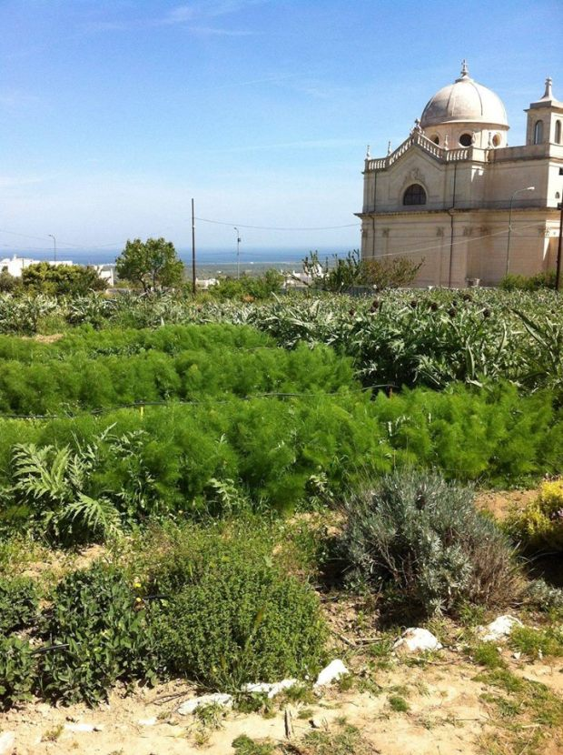 Discovering Grata Garden Ostuni