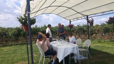 Dining_In_the_Vineyard