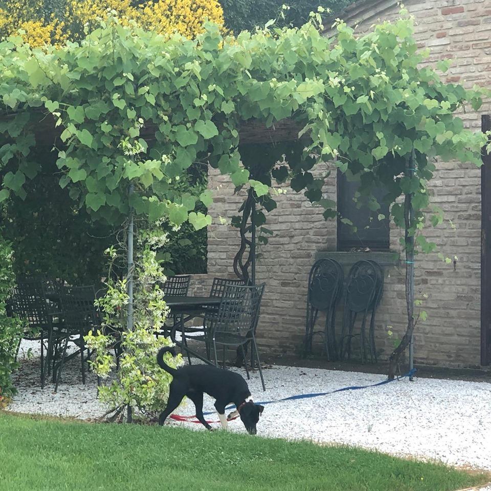 Zola loving Tuscany life
